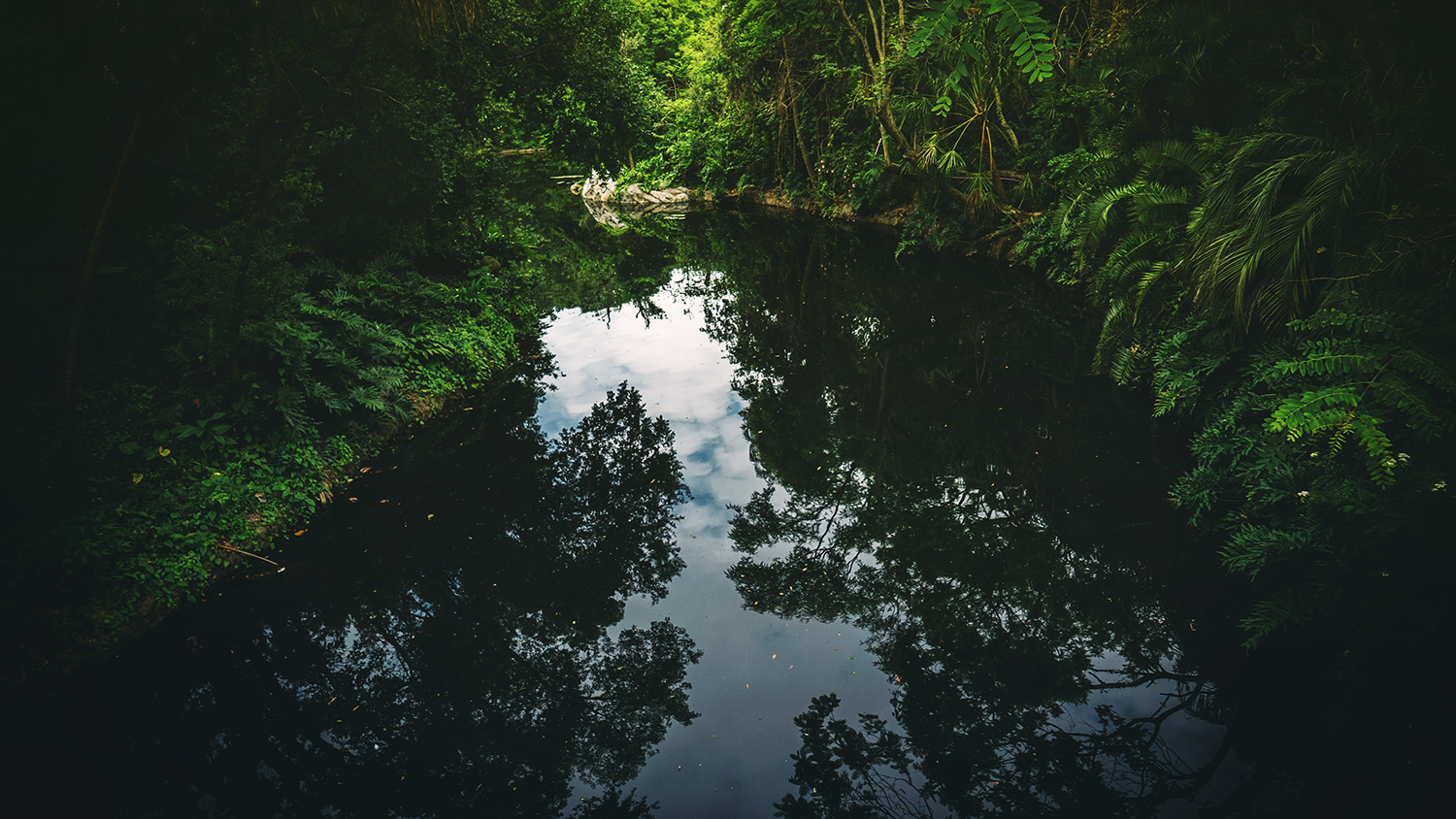 Jungle reflection in river