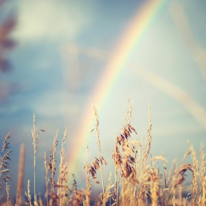 Rainbow behind grasses