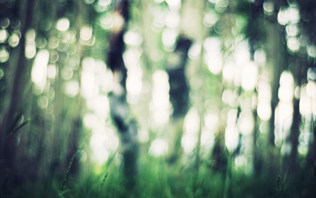 bokeh in apsen forest