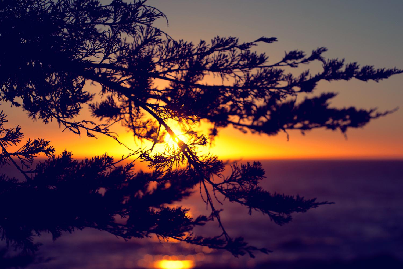 Sunset over Ocean behind branch