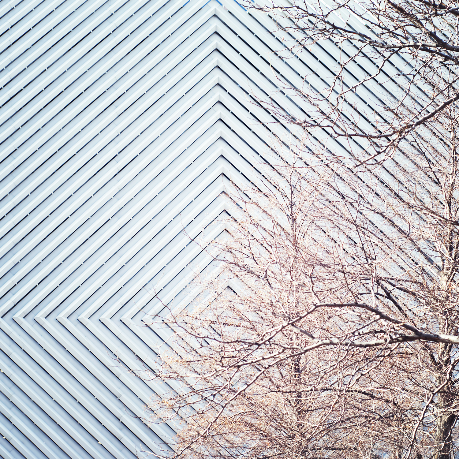 Tree Branches in front of Diamond Shaped Wall