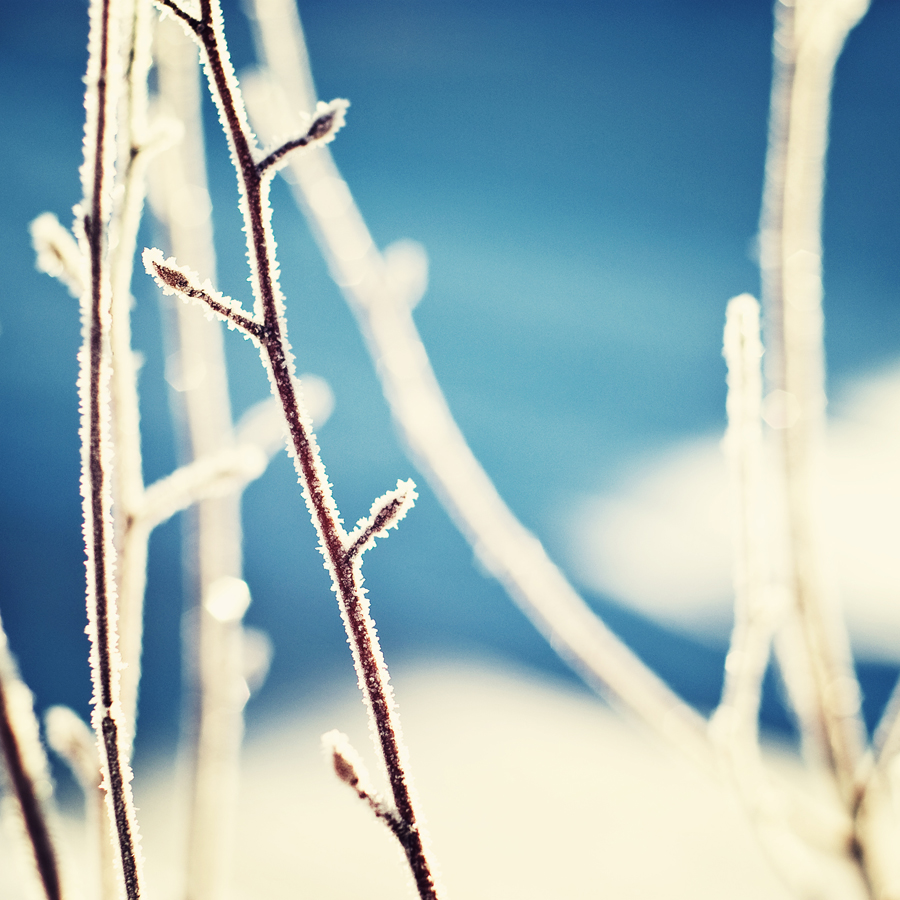 Frozen Branch against Blue Background