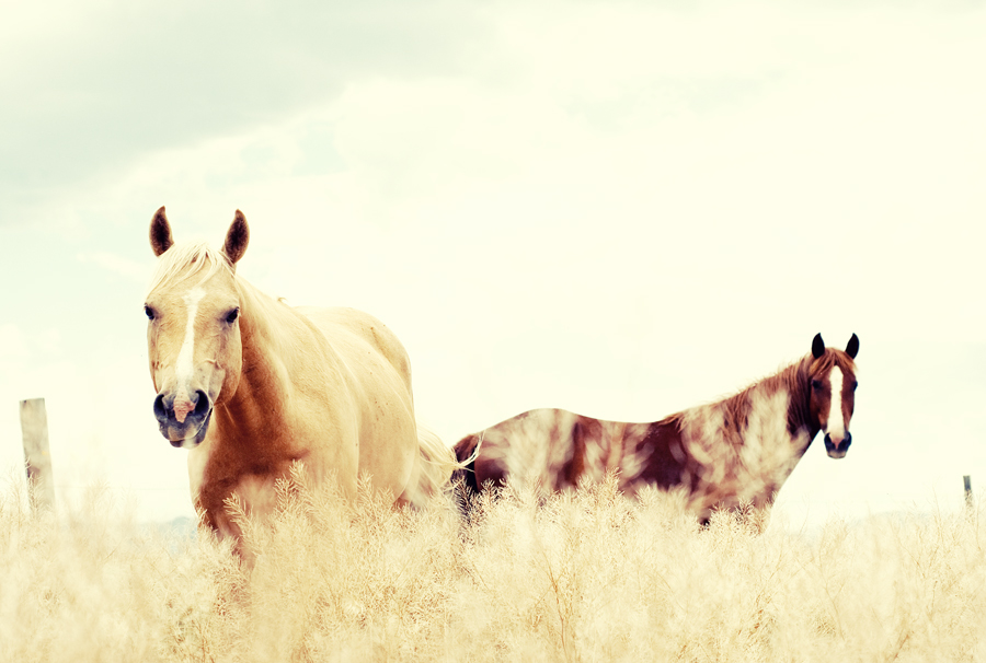Vintage Style Photo of Horses in Field