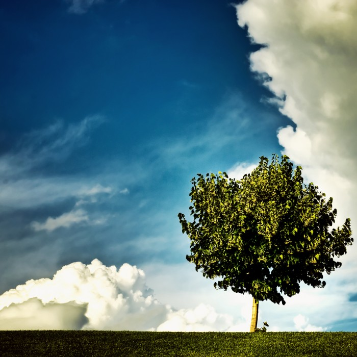 Single tree with clouds in the sky