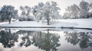 Winter Snowy reflection