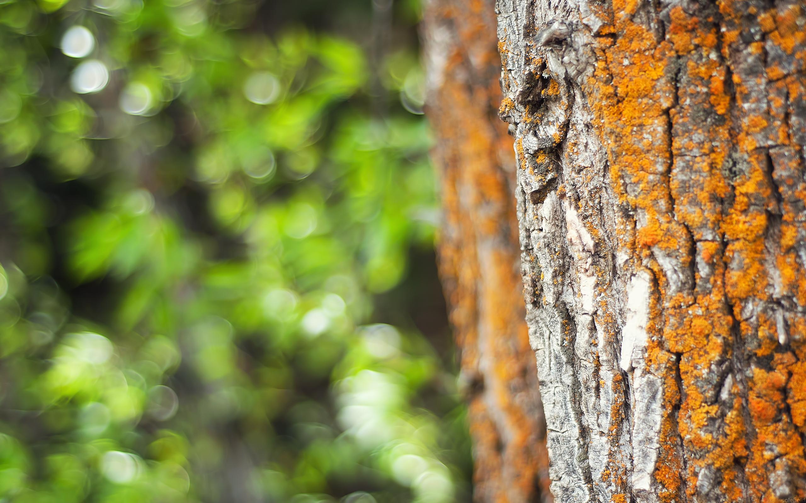 Tree with Orange Moss