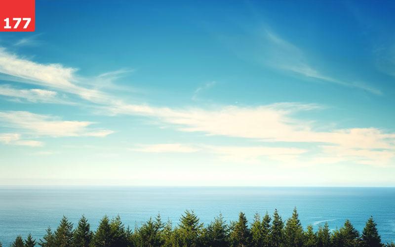 Ocean Horizon Behind Trees
