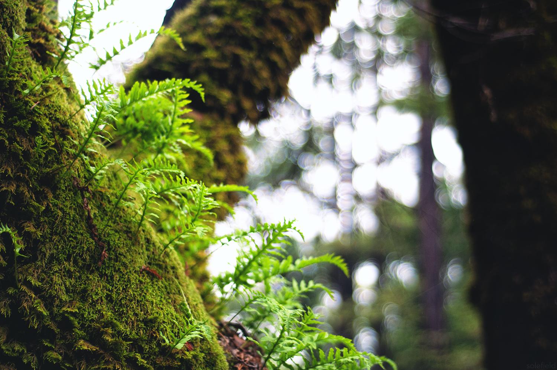 Ferns growing on moss tree