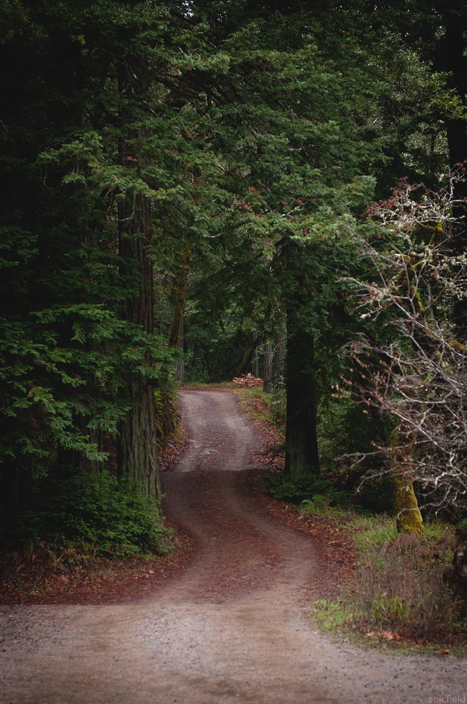 Dirt Road through Pine Trees