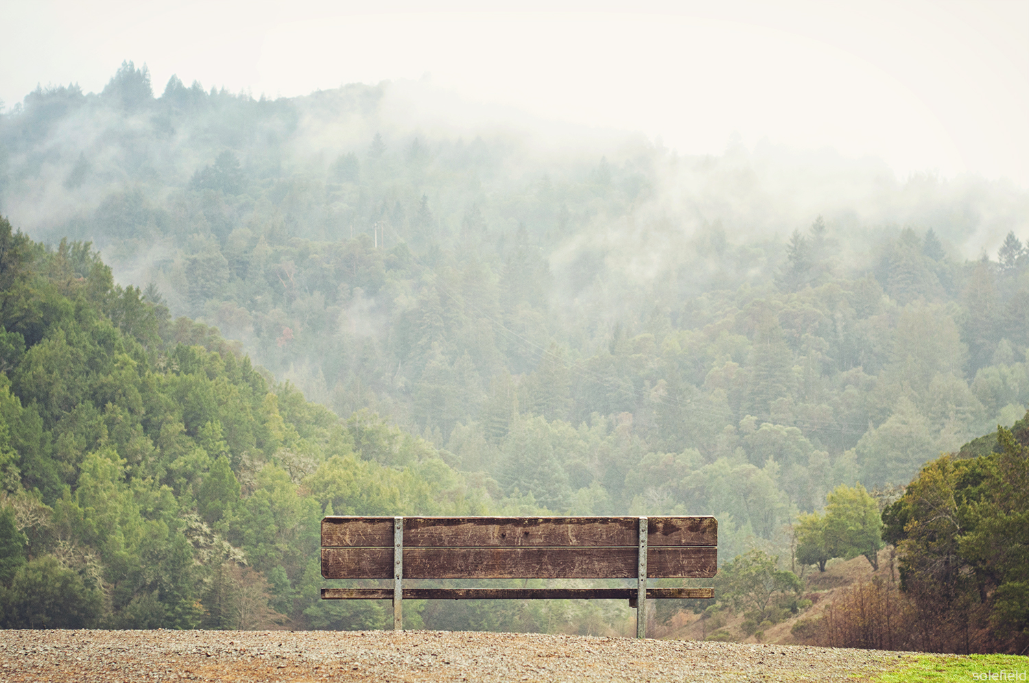 Bench in front of foggy trees
