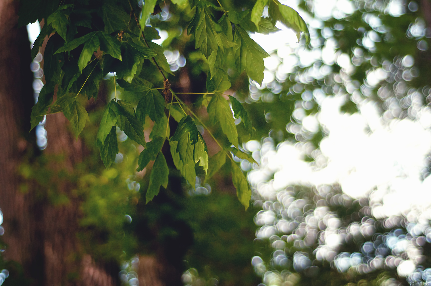 Tree Branches in the Summer