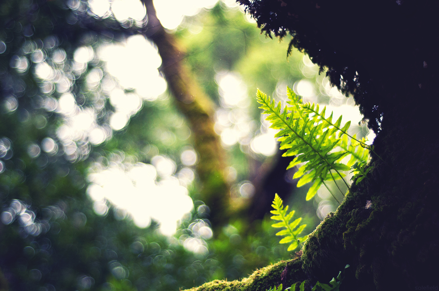 Ferns growing on a tree