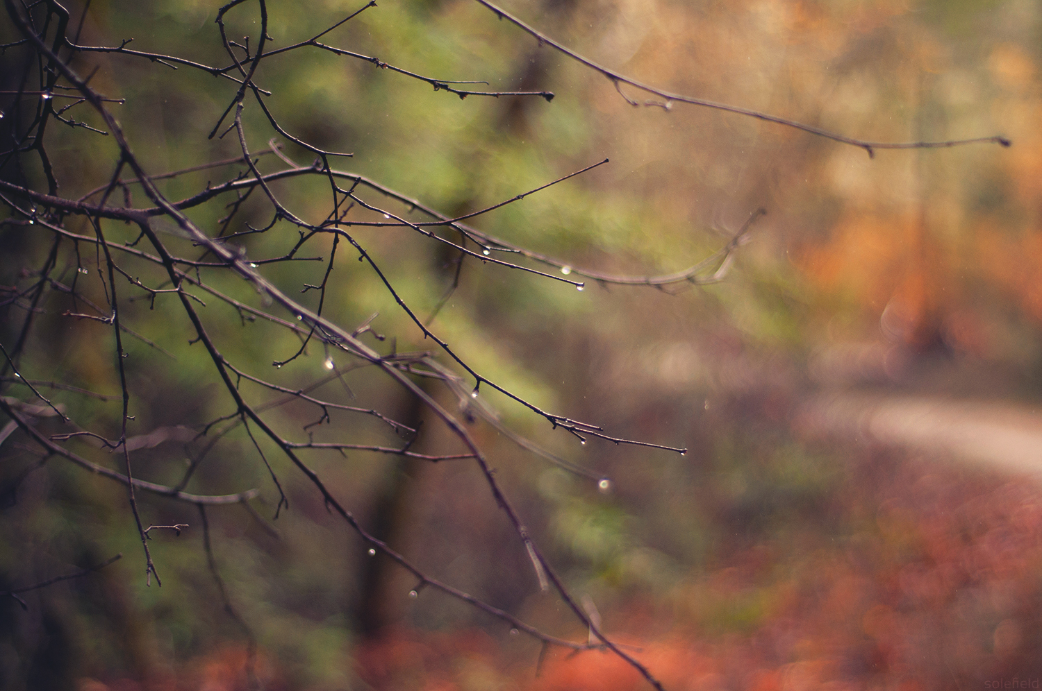 Droplets on a bare branch