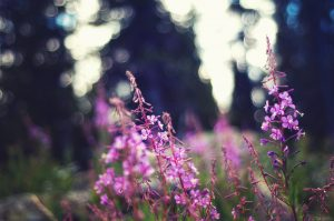 Purple flowers in forest