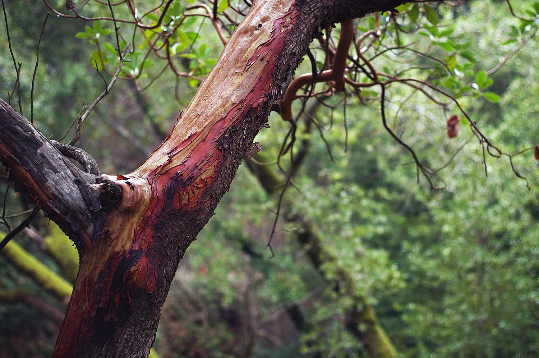 Rain covered stripped tree