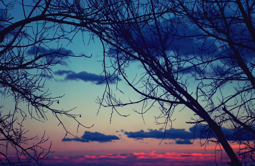 Sunset behind bare branches