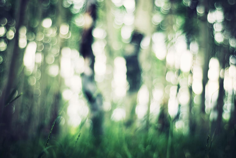 Bokeh in an aspen forest