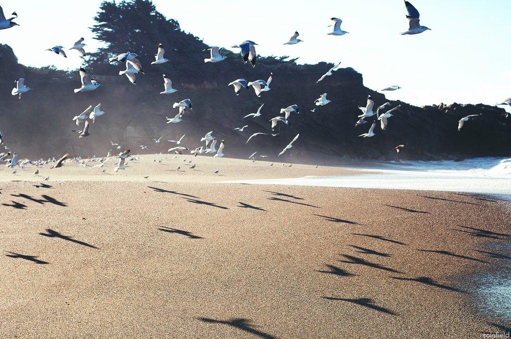 Seagulls flying on the beach