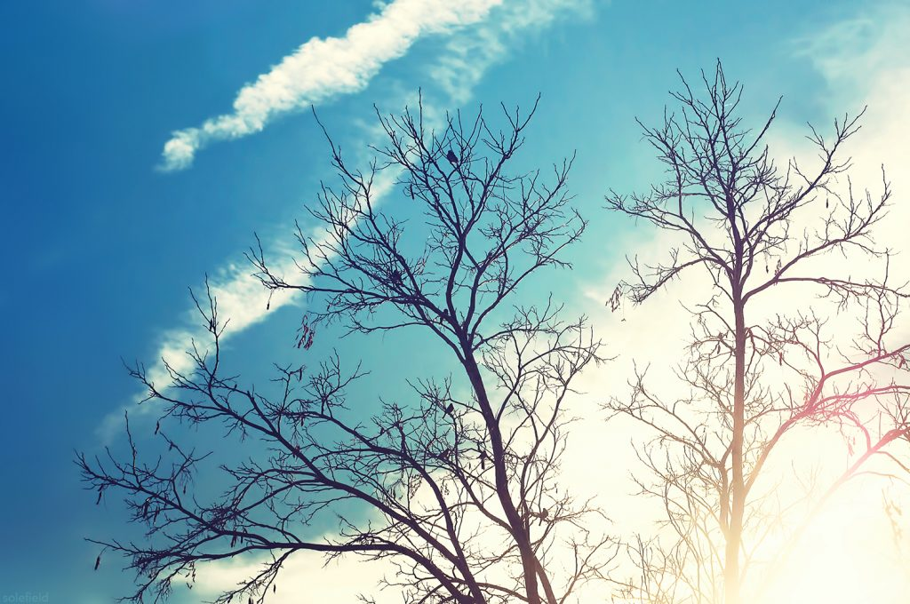 Silhouette of bare tree in front of blue sky