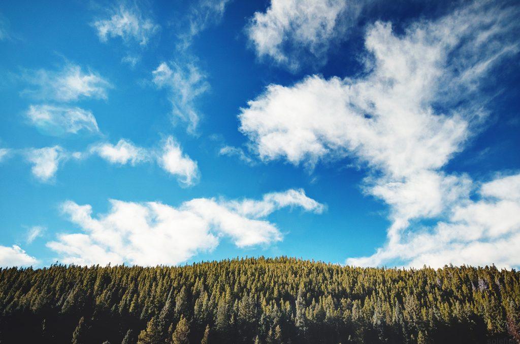 Blue Sky Over Pine Trees in Colorado
