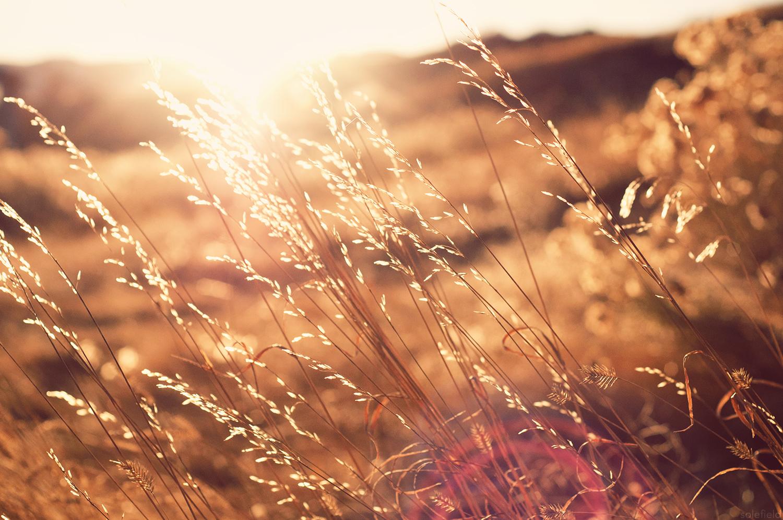 Golden Hour Sunlight