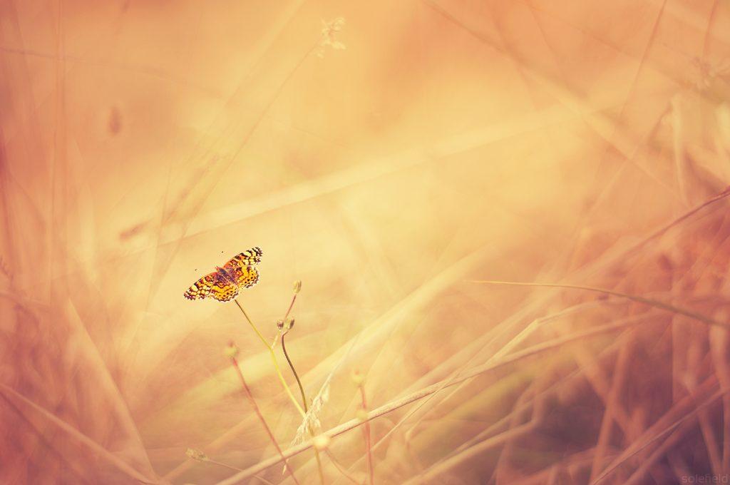 Orange Butterfly in the Grass