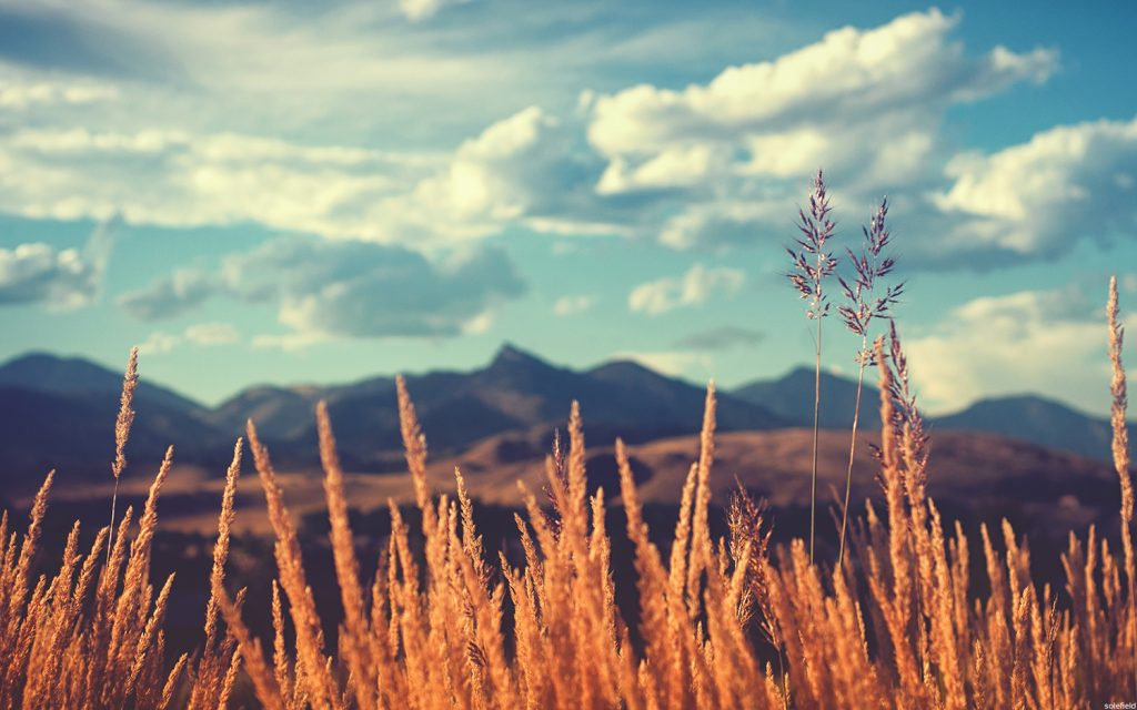 Colorado scene with grass and foothills