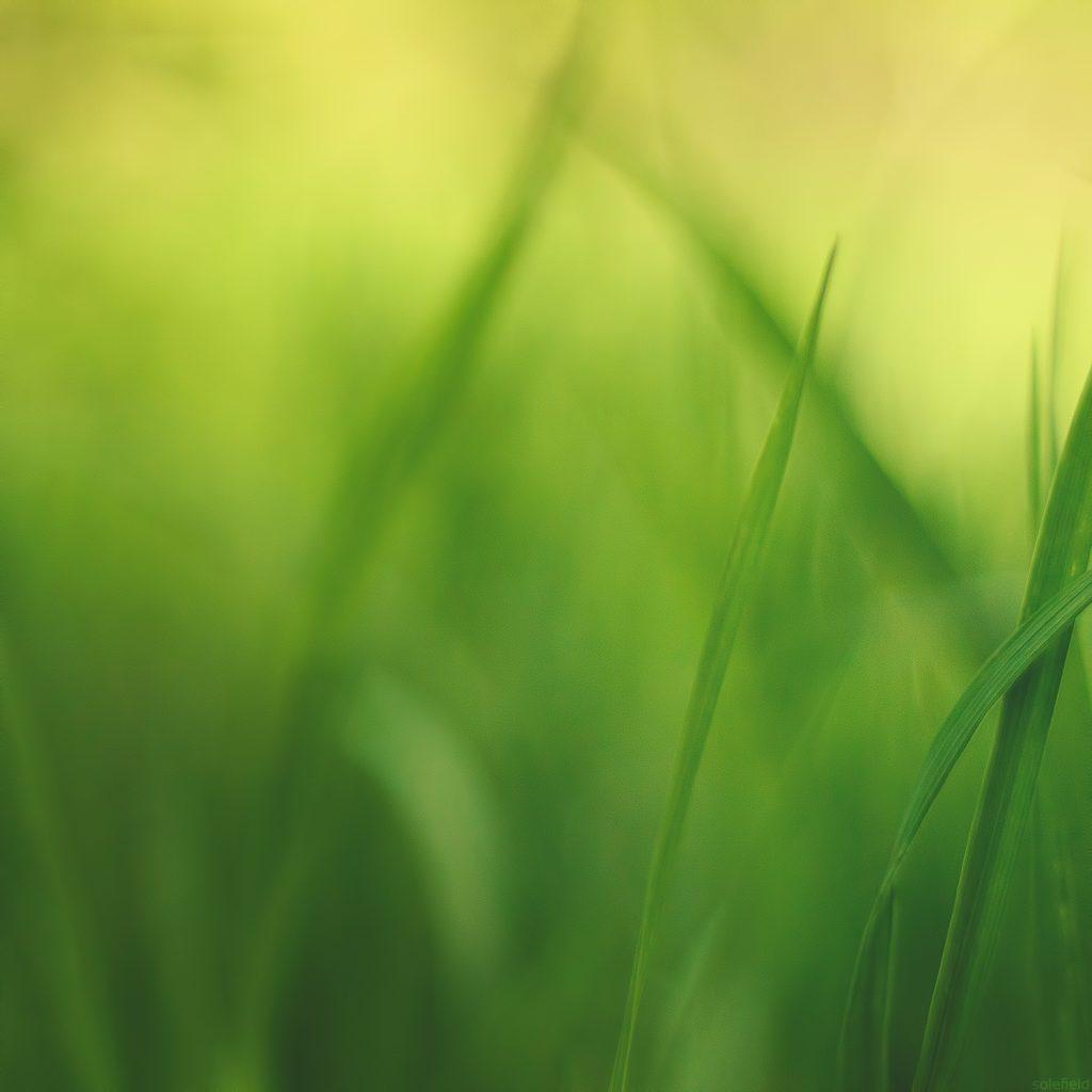 Abstract Green Grass
