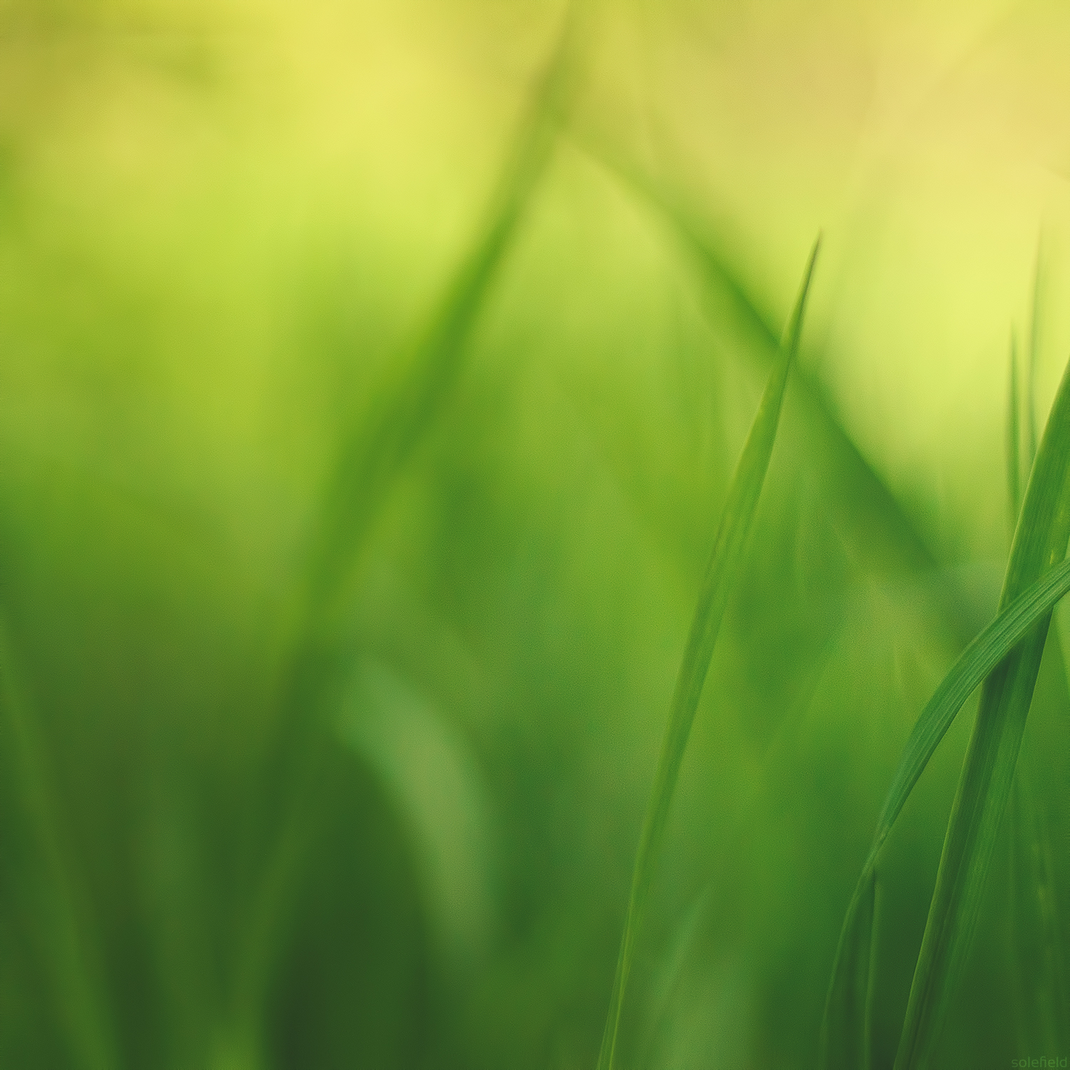 Abstract Green Grass