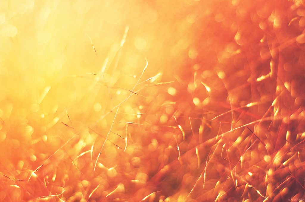 Bright Sparks in Yellow Grass