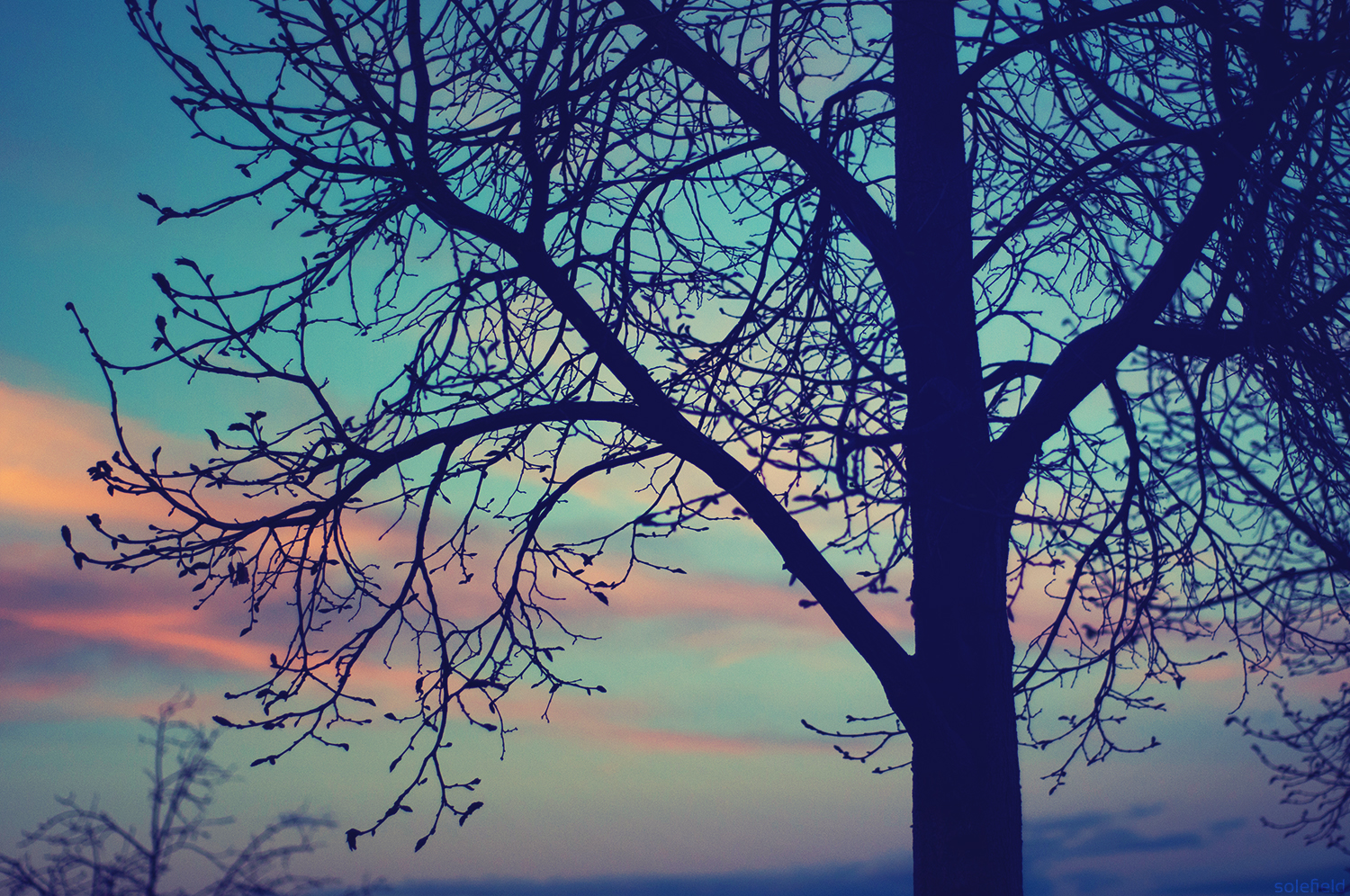 Blue and Pink Sky with Tree Silhouette