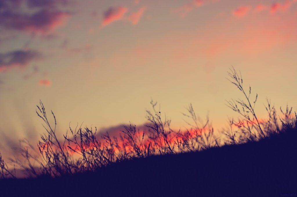 Sunset sillhouetted grass
