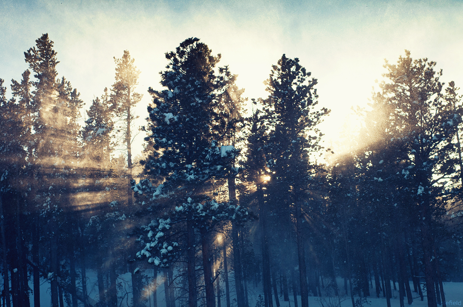 Light Shining through Snow Covered Trees