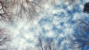 Looking up at clouds through winter trees