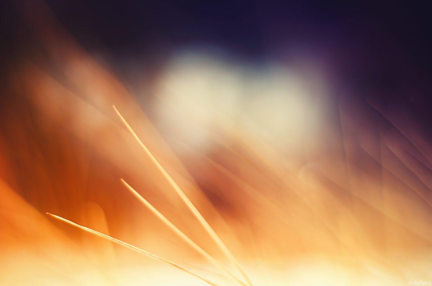 Abstract Brown Grass with Shallow Focus