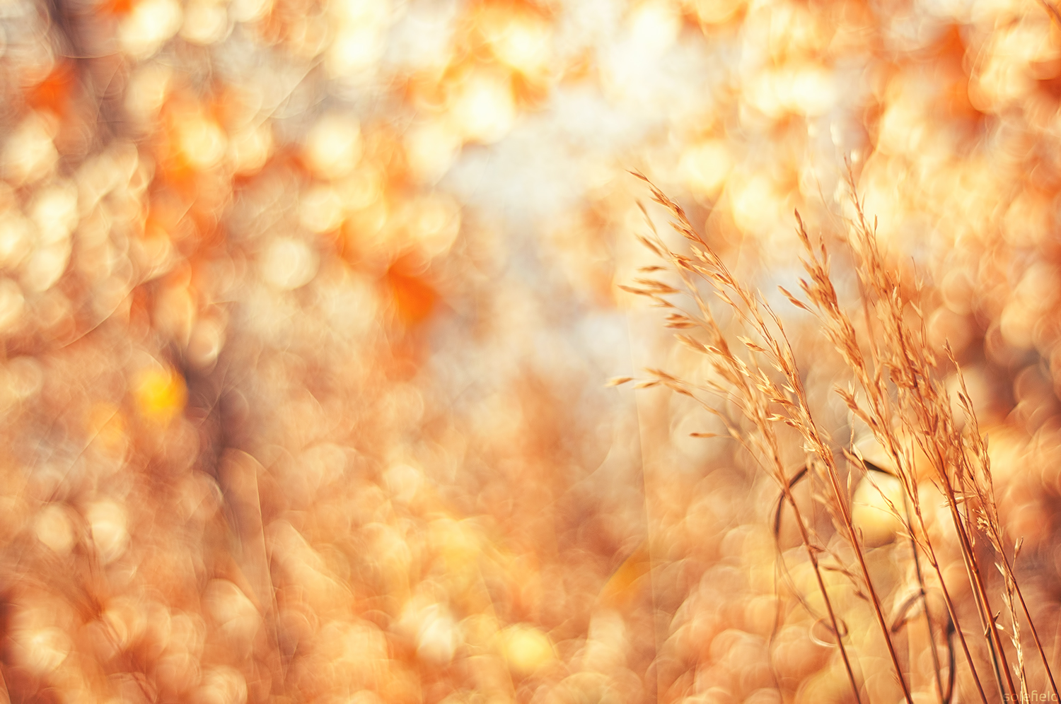 Fall Colors Bokeh Grass