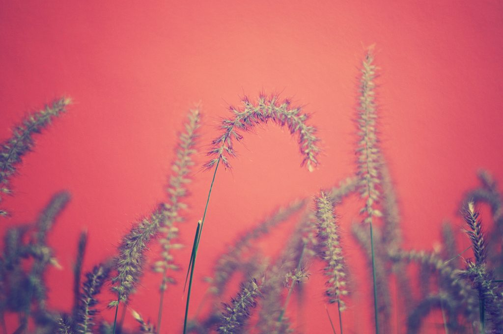 Plant infront of pink background