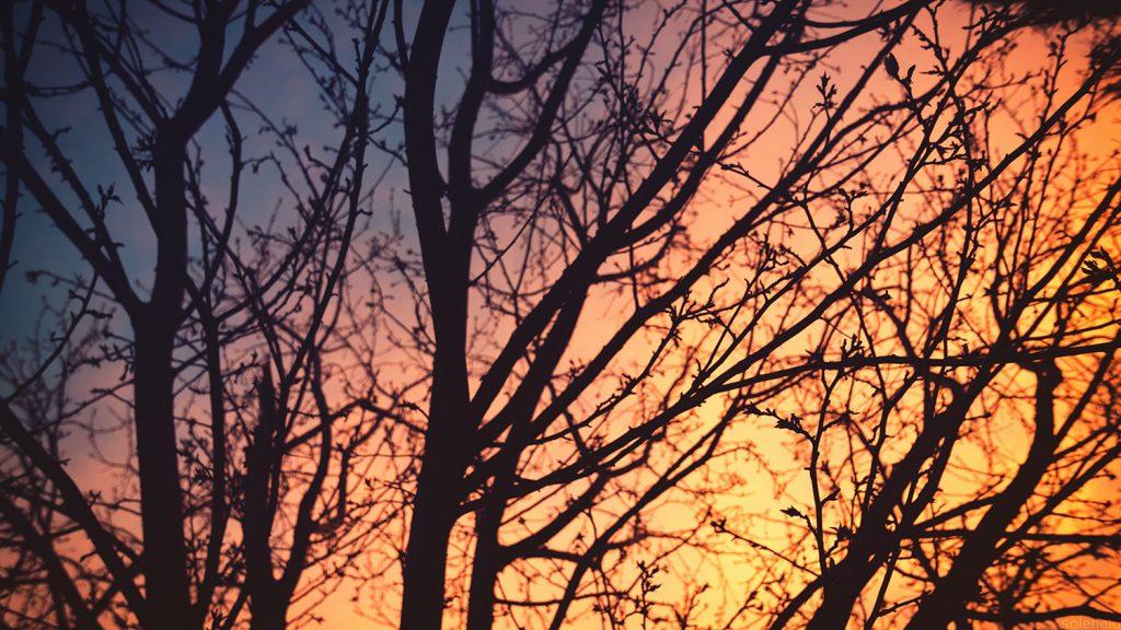 Winter Sunset behind tree silhouette