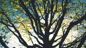 Silhouette of tree branches in spring