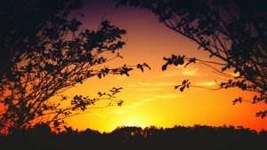 Yellow Sunset behind trees