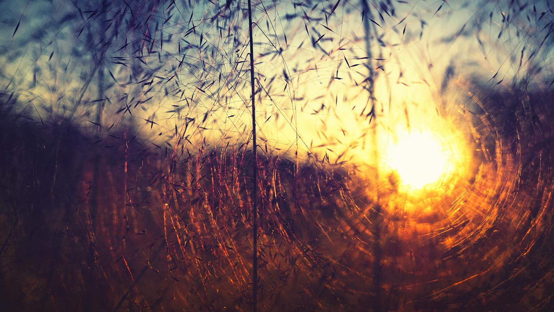 Sun radiating through grasses at sunset