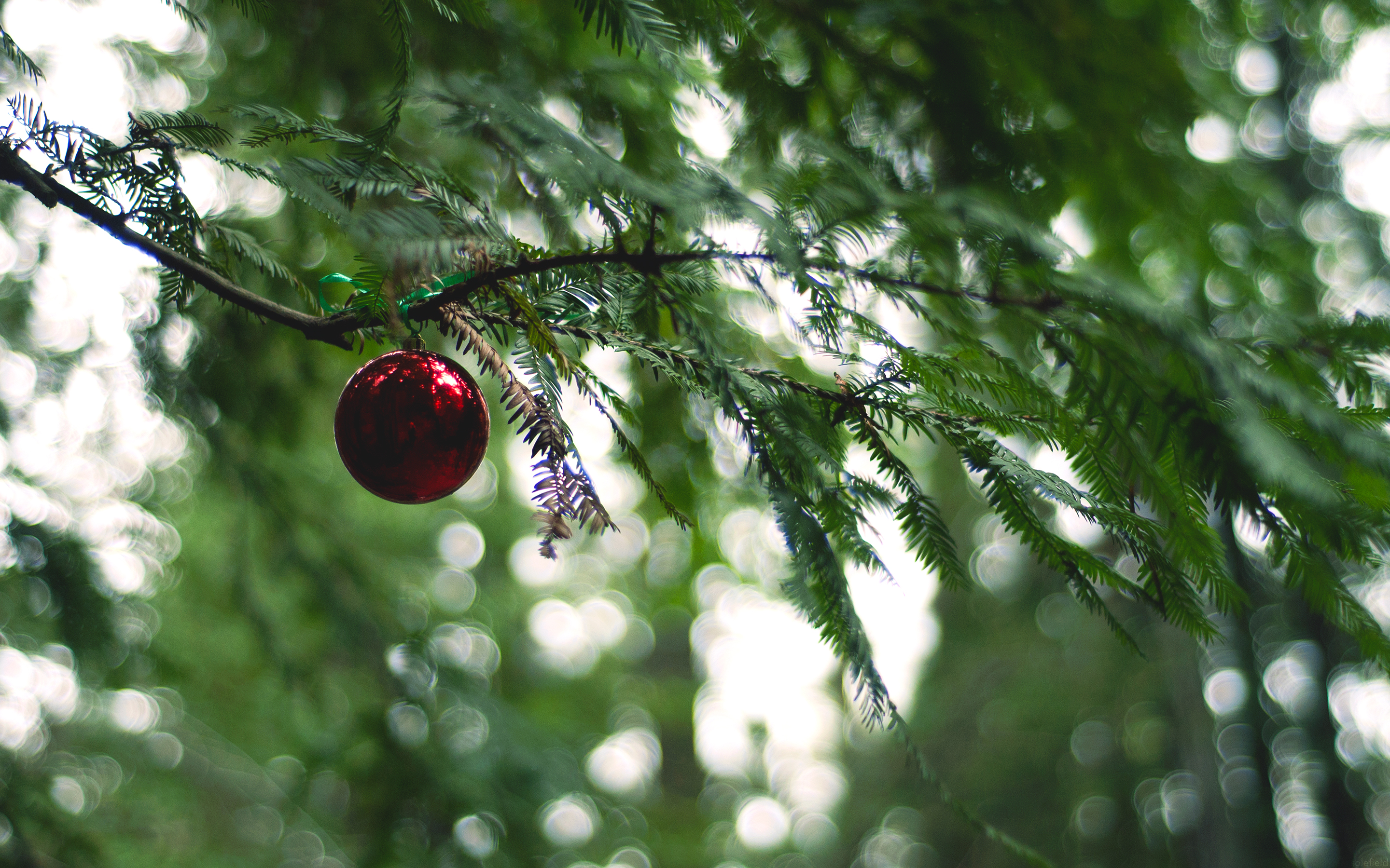 Christmas Ornament in a Forest