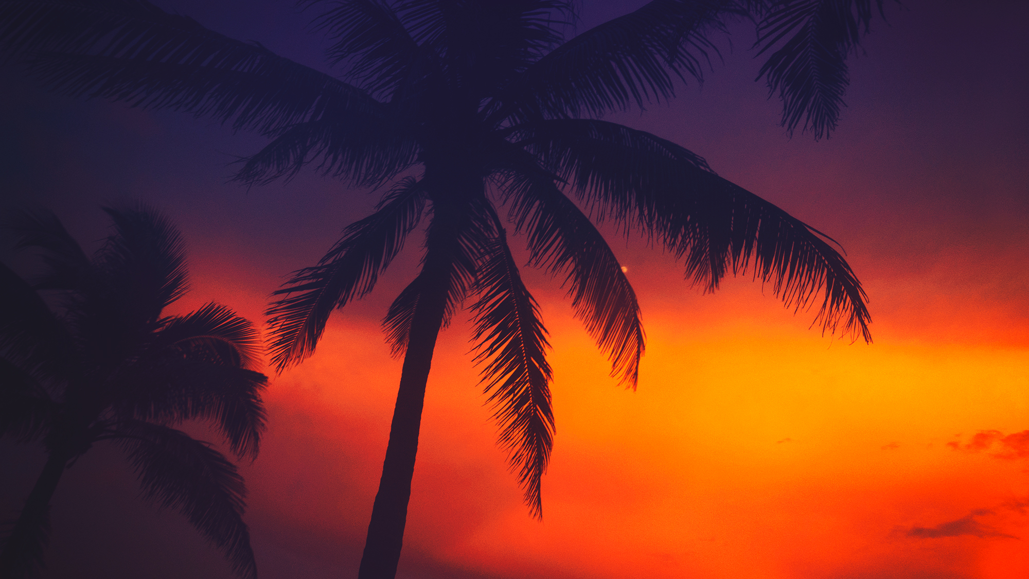 Palm tree with dramatic sunset in Miami