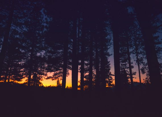 Sunset through dark trees in a California forest