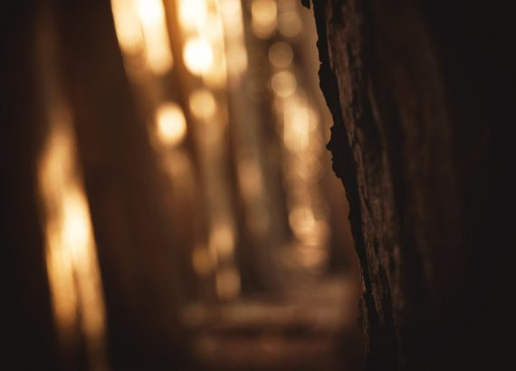 Dark Forest Details