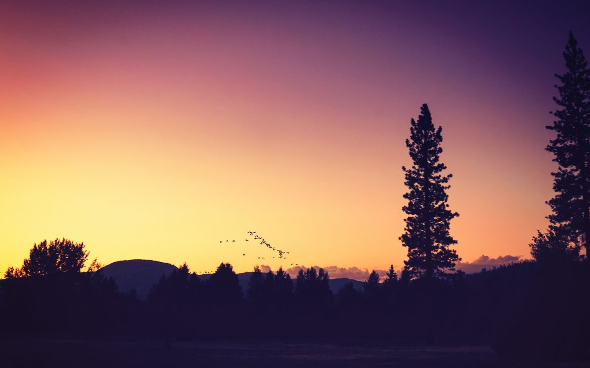 Birds flying at sunset in mountains