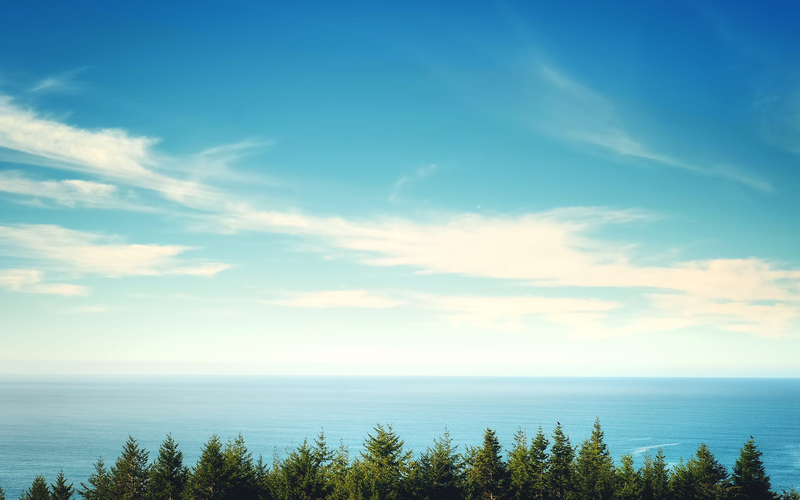 View of the ocean over trees